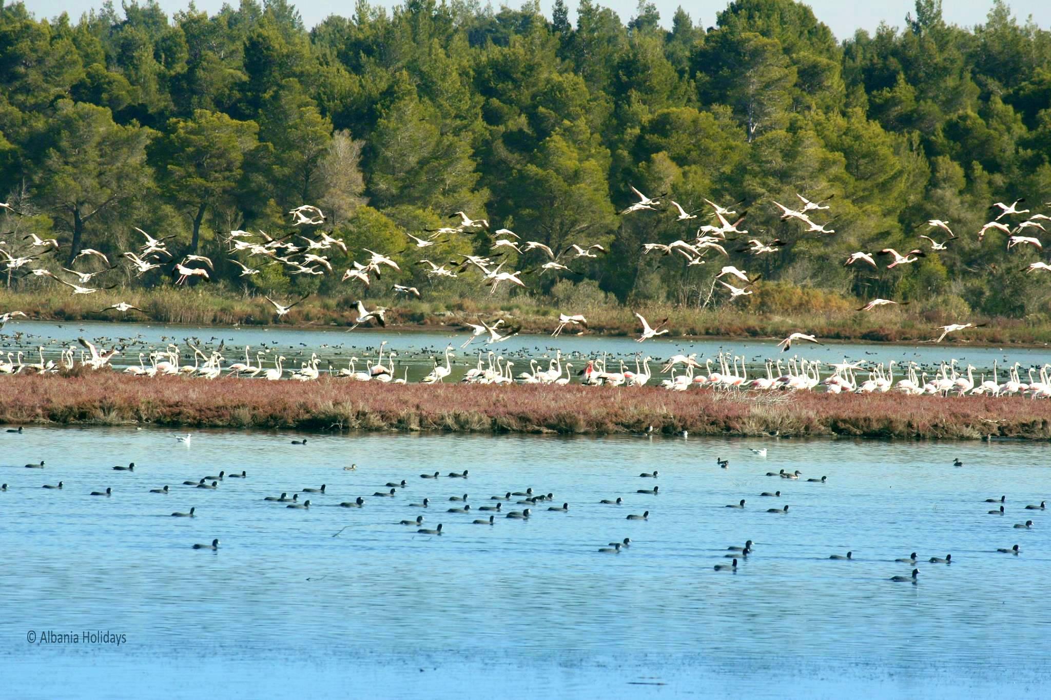 karavasta lagoon albania